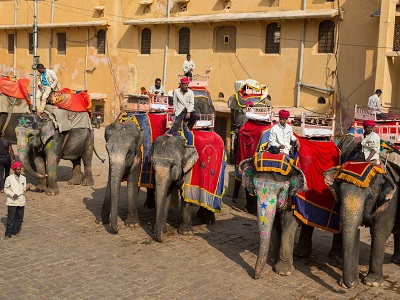 Amber-Fort-Elephants